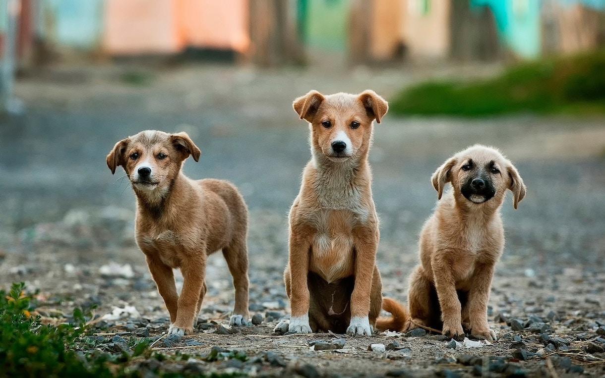 Dog Ownership in Seattle | Amber Thomas Data Portfolio & Blog