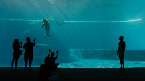 Silhouetted people of various ages stare into aquarium at several dolphins underwater